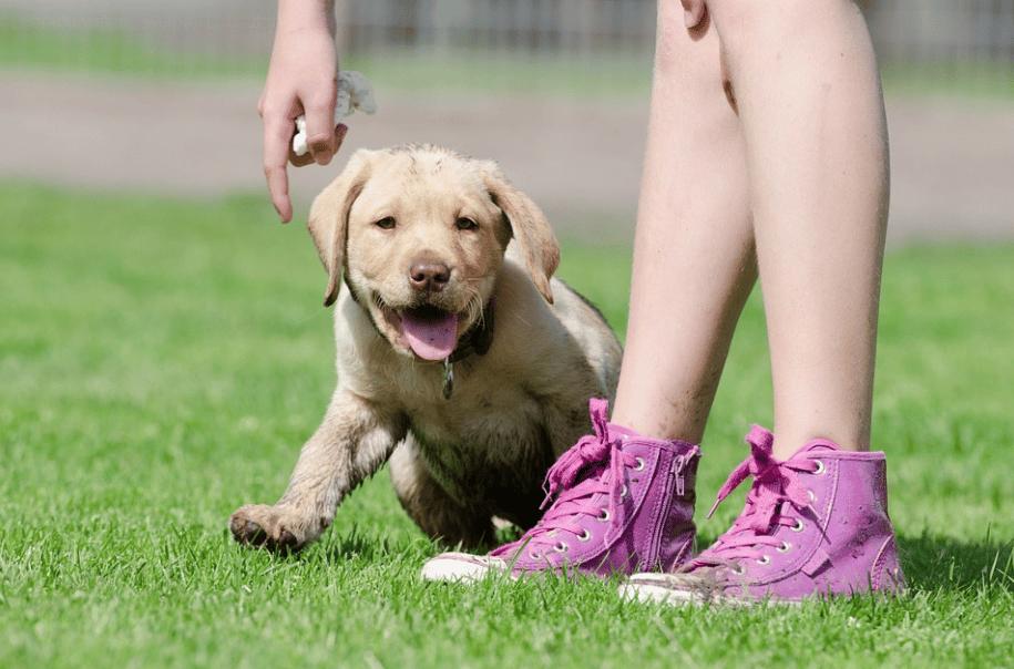 Hundeschule Kosten – Rechnet sich eine Welpenschule wirklich?