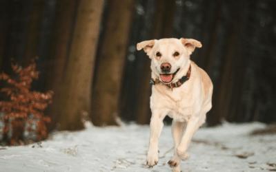 Welpen im Winter – Was du brauchst und unbedingt beachten musst