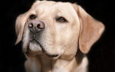 Hundebürste Kurzhaar – Test und Erfahrungen